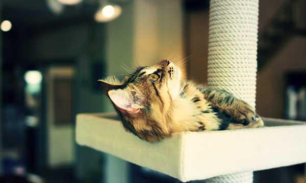 【猫カフェ体験した?】都内のおすすめ猫カフェで猫好き同士が交流会【趣味コン・趣味活レポート】