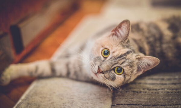 人気猫カフェ「渋谷MoCHA」で「pairs×街コンジャパン」がコラボイベント♪【趣味コン・趣味活レポート】