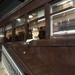 街コン案内人えりっち潜入企画vol.4 『恋活トレインミュージアムコン@大宮』に潜入してみた!