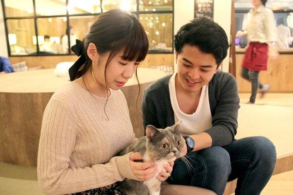 縁結びの招き猫!? 猫カフェコンで出会ったカップルが結婚するまで♡