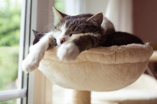 可愛いワンチャンや猫に会える♡ 都内で動物とふれあえるスポット、イベントをご紹介
