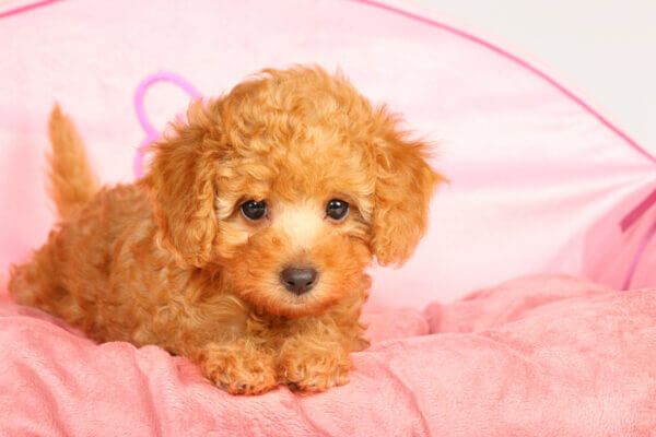 話題の可愛い犬画像&動画を紹介! 可愛い名前や犬種ランキングも!