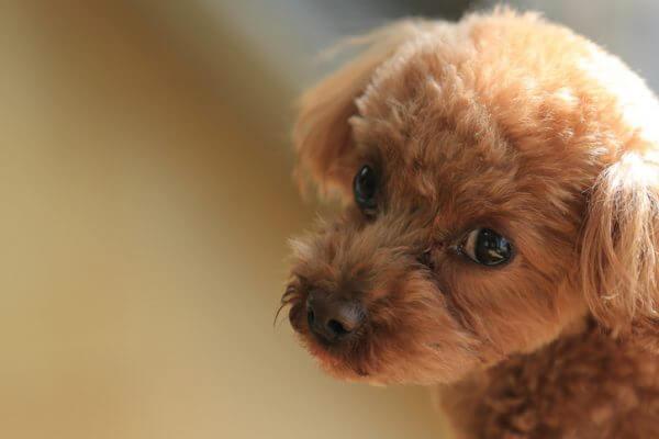 保護犬カフェ12選 東京 大阪 鶴橋 など人気店をご紹介 マチコネ